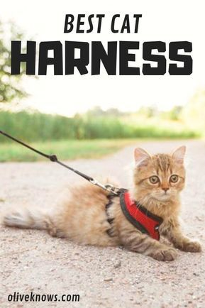 The Best Cat Harness That Your Cat Will Love In 2020 Best Cat Harness Cat Harness Cats