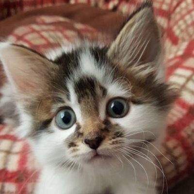 Cats And Kittens On Instagram 7th March 2018 Baby Cats