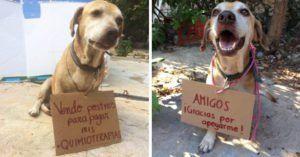 Perrito Con Cancer Logro Pagarse Las Quimioterapias Vendiendo Postres Perrito Fotos De Perros Memes Perros