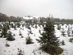 Image Result For Taylor Swift S Parents Christmas Tree Farm Parents Christmas Christmas Tree Farm Tree Farms