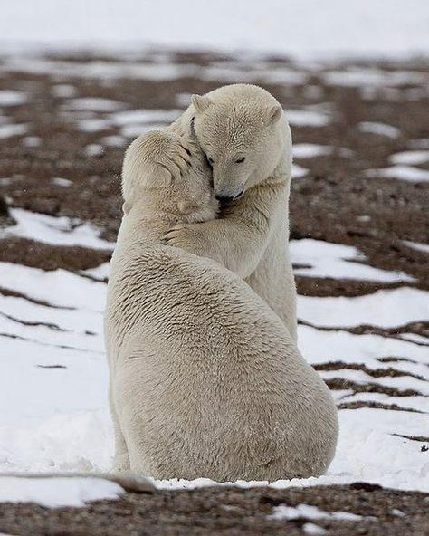 ANIMAL LOVE ON THE NORTH POLE ♥♥♥