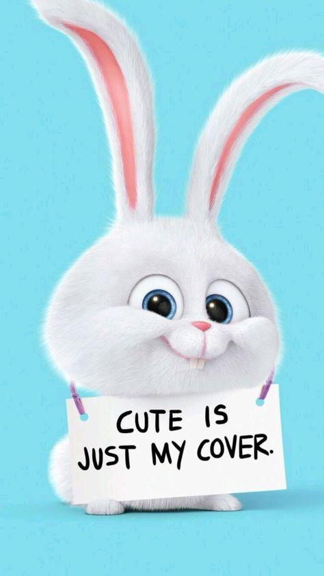Meet the 'Psycho Bunny' - Snowball