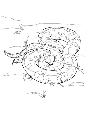 Green Anaconda Coloring Page Snake Coloring Pages Green