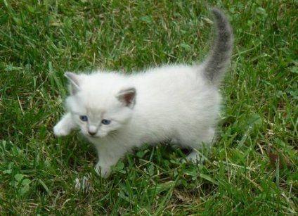 Cats Grey Sweets 48 Best Ideas Cats Cute Little Kittens