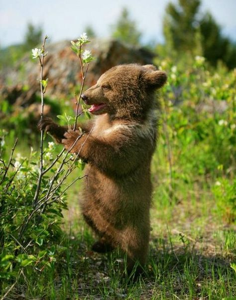 What is Baby Bear thinking?  I'm thinking writing prompt.