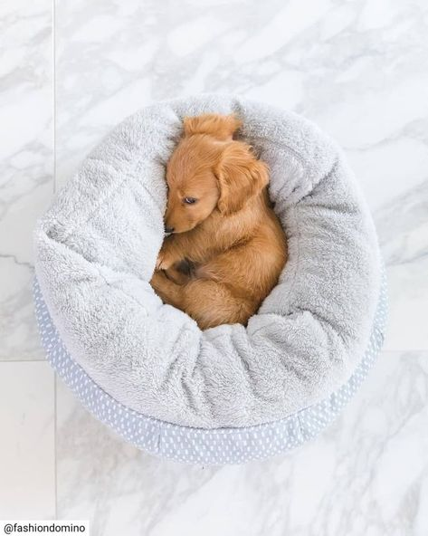 "Get terrific recommendations on ""dachshund puppies"". They are on call for you on our site. Super Cute Puppies, Cute Little Puppies, Cute Little Animals, Cute Dogs And Puppies, Hot Dogs, Funny Dachshund, Dachshund Puppies, Weenie Dogs, Dachshund Love"