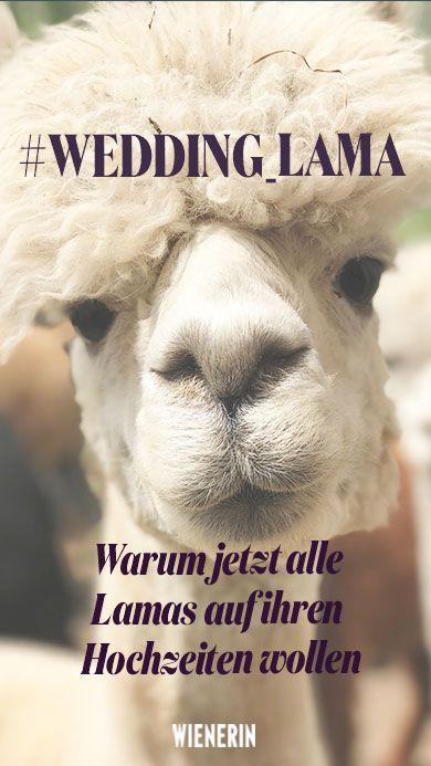 Wedding Lamas Sind Die Besten Hochzeitsgaste Uberhaupt Wienerin Hochzeit Hochzeitsgaste Hochzeitssaison
