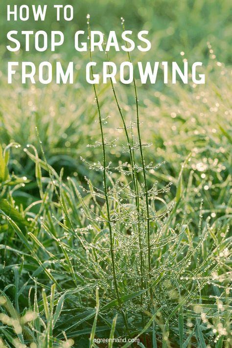 How To Stop Grass From Growing Grass Gardening For Kids Garden Help