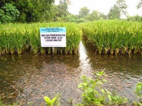 Jogja Istimewa Foto Ini Hebohkan Facebook Ngemplak Yogyakarta