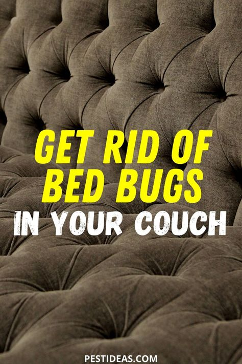 Get Rid Of Bed Bugs In Your Couch In 2020 Rid Of Bed Bugs Bed
