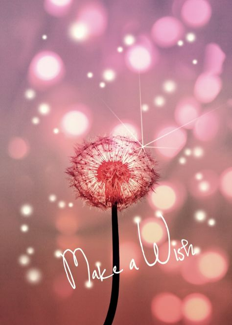 Displate Poster MAKE A WISH dandelion #wish #quote #words #text #lights #fireflies #pink #dandy #flower #dream #love #cute #pastel #yellow #new