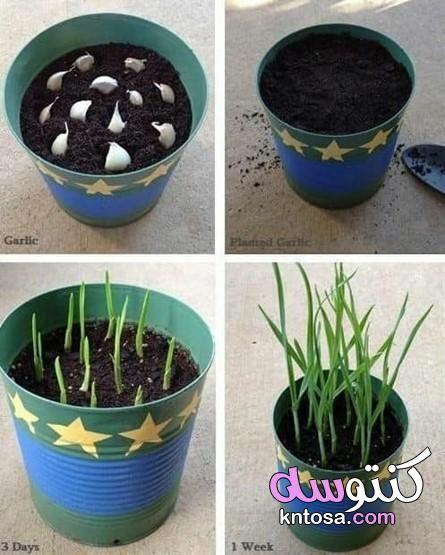 زراعة منزلية سريعة النمو نباتات سهلة الزراعة في المنزل الزراعة المنزلية في السطح زراعة منزلية مربحة Growing Garlic Growing Vegetables Edible Garden