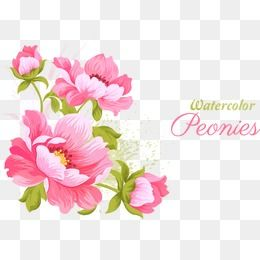 Pink Flowers Vector Material Plant Flowers Peony Png And Vector