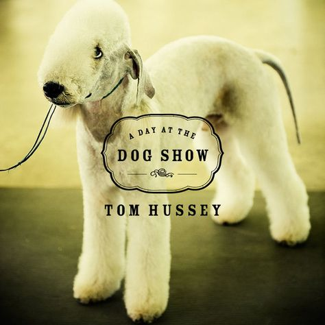 Tom Hussey