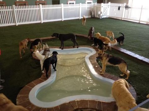 Pin By Laurie Russo On Dog Daycare Design In 2020 Dog Boarding Facility Luxury Dog Kennels Dog Hotel