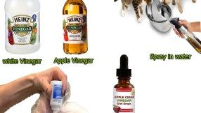 15 How Does Vinegar Kill Fleas Does Vinegar Work To Get Rid Of