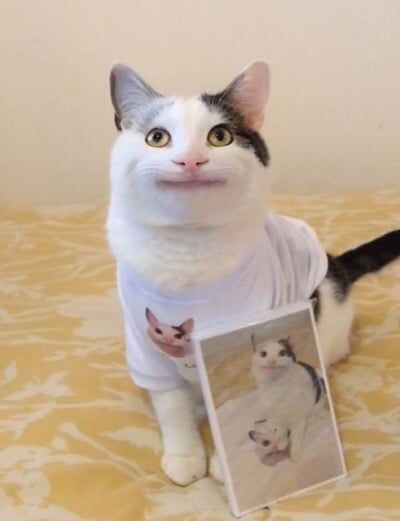Oh Snap Its Polite Cat Yall With Images Cute Animal Memes