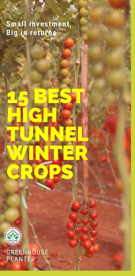15 BEST HIGH TUNNEL WINTER CROPS - GreenHouse Planter - #crops #greenhouse #planter #Tunnel #winter - #GreenhouseGardening