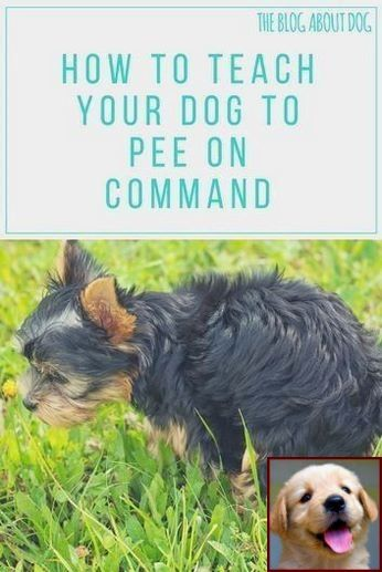 1 Have Dog Behavior Problems Learn About House Training A Puppy How Long Does It Take And Dog Behavior Ch With Images Dog Training Dog Clicker Training Dog Training Tips