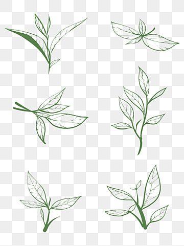 Tea Line Draft Clipart Black And White Tea Line Draft Png Transparent Clipart Image And Psd File For Free Download Ilustrasi Teh Hijau Daun