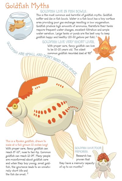List Of Pinterest Ryuken Goldfish Care Pictures Pinterest
