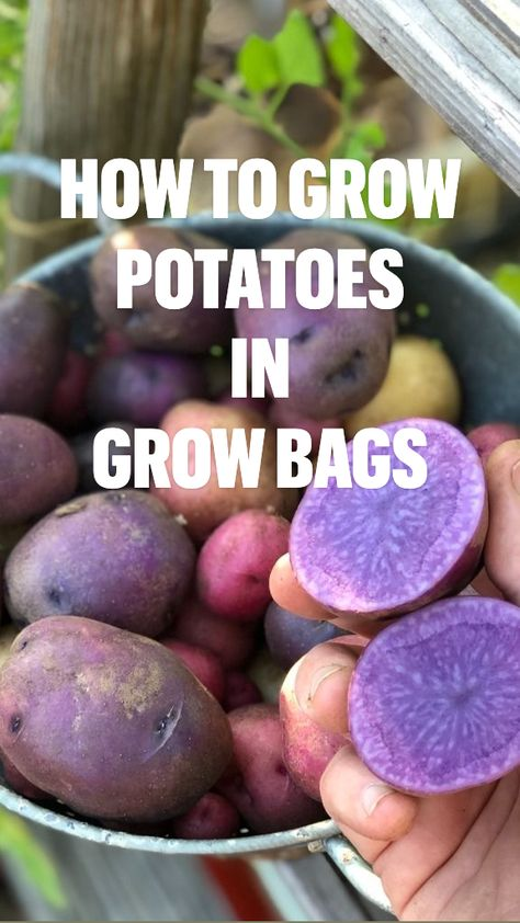 How to Grow Potatoes in Grow Bags