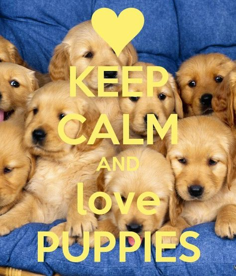 Keep Calm And Love Puppies Puppy Quotes Cute Puppies Puppies