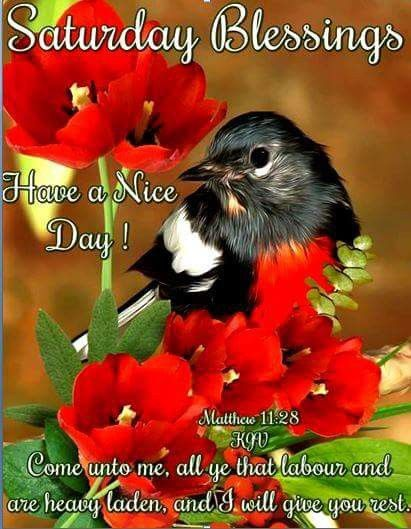 Saturday Blessings Happy Saturday Images Happy Saturday Quotes Saturday Quotes