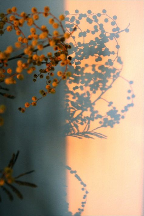"Still Life Photography, ""Sunset Ikebana - Limited Edition 1 of"