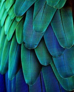 Analogous Colors Definition Examples And Schemes Green Photo