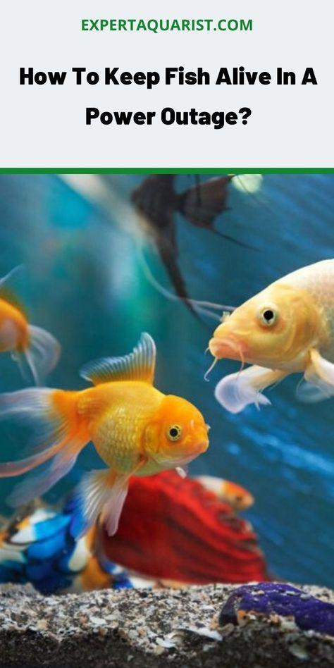 Home Fish Aquarium Fish Pet Health