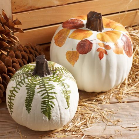 Use Mod Podge to decorate faux fall pumpkins with leaves. Easy no carve pumpkin decorating that is safe for the kids! Looking for an easy no carve pumpkin idea? Decoupage leaves on a pumpkin with Mod Podge! It's quick, easy, and kid friendly. Thanksgiving Decorations, Thanksgiving Crafts, Fall Crafts, Holiday Crafts, Holiday Fun, Pumpkin Decorations, Fall Pumpkins, Halloween Pumpkins, Fall Halloween