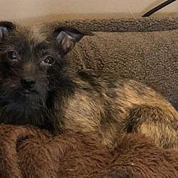 Fort Wayne In Miniature Schnauzer Meet Jj A Dog For Adoption Kitten Adoption Dog Adoption Pets