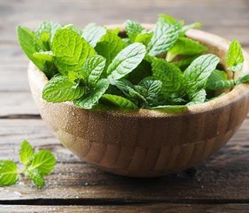 فوائد النعناع اليابس مسكن لآلام الدورة الشهرية وطارد للديدان Peppermint Leaves Apple Health Benefits Mint Simple Syrup
