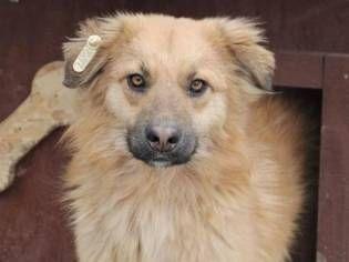 Hurra Alle Rumis Konnen Reisen Herzlichen Dank Allen Spender Innen Tierheim Hunde Tiere