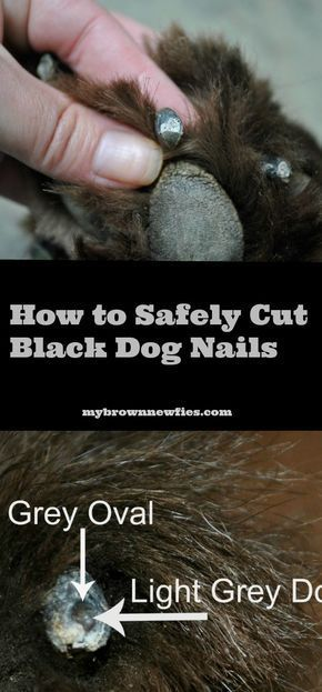 How To Safely Trim Your Dog S Black Nails Dog Nails Clipping Dog Nails Trimming Dog Nails