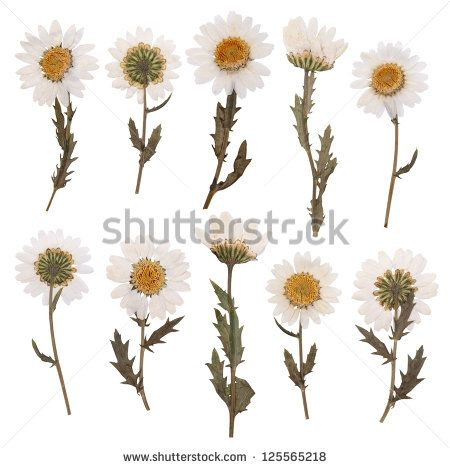Dried Flowers Stock Photos, Images, & Pictures | Shutterstock