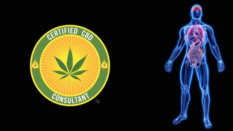 can drug sniffing dogs smell cbd oil
