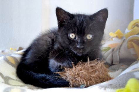 The Trouble With Not Tribbles But Kittens Kitten Adoption Kitten Season Baby Cats