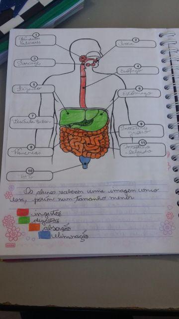 Pin Em Estudo