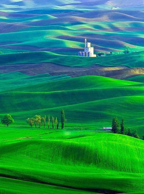 """The Palouse region, Washington State, USA"""