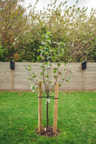 How To Grow Fruit Trees Trees To Plant Fruit Trees Growing Fruit Trees