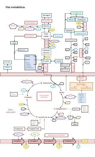 Vías metabólicas integradas