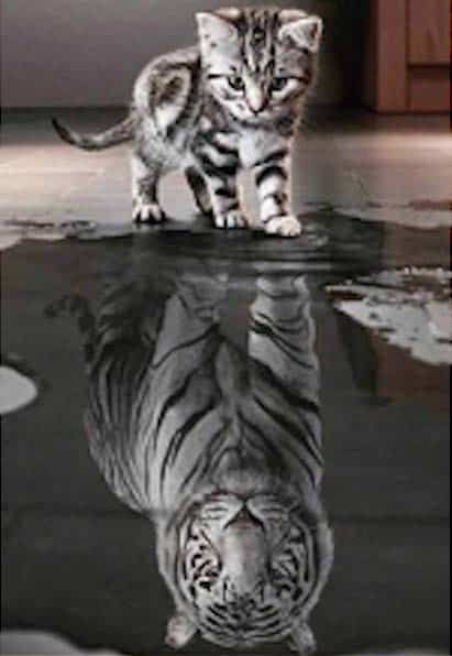 Kitten Reflection As A Tiger Round Drill Diamond Painting Saga Animals Kitten Pictures Kitten Images