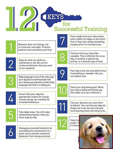 Common Dog Behavior Questions And Dog Training Classes Los Angeles