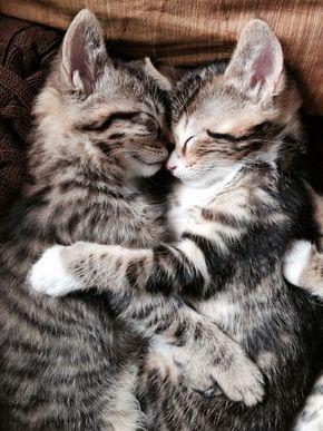 L'amour est le seul sentiment où l' on est sûr de le partager avec quelqu'un ❤