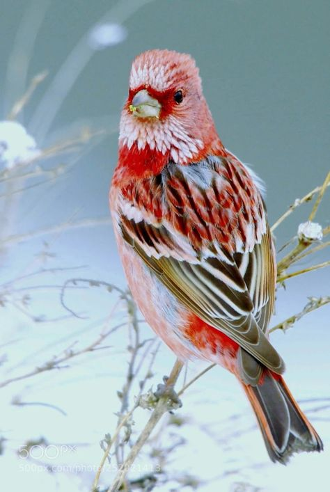 Beautiful bird image and color palette.