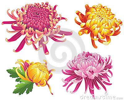Couleur De Fleurs De Fleur De Chrysanthème Chrysanthèmes