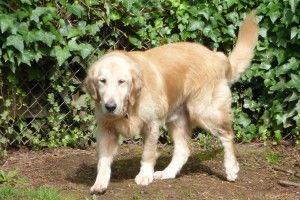 Michael 2557 Support Dog Cat Training Animal Rescue