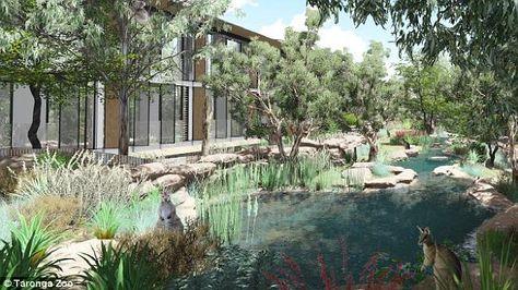 Sydney S Taronga Zoo Unveils New Overnight Accommodation Zoo Disney Zoo Modern Eco Friendly Home